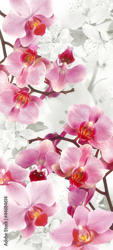 Flowering Orchids and Cherry decoration