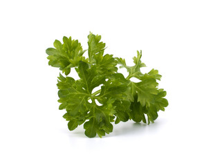 Fresh parsley closeup isolated on white