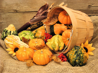 Harvest pail of spilling autumn gourds and pumpkins