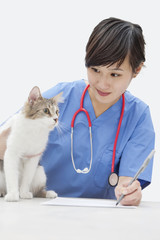 Female vet looking at cat while writing on paper over gray background