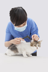 Female veterinarian examining cat's ear with an otoscope device against gray background
