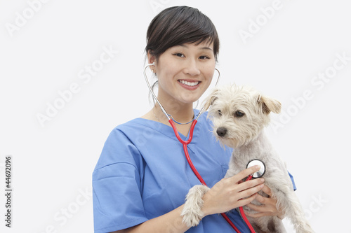 Portrait of Asian female veterinarian examining dog over gray background