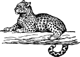 Leopard on the branch of the tree