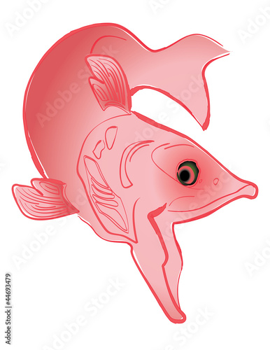 Swimming salmon illustration, isolated on white background.