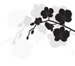 stylized black orchid