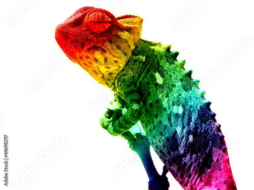 Keuken foto achterwand Kameleon Chamäleon Regenbogen freigestellt