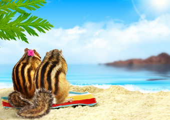 chipmunks on the beach, honeymoon concept