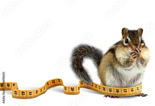 Fat chipmunk with measuring tape