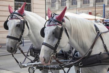 Traditional horse coach Fiaker