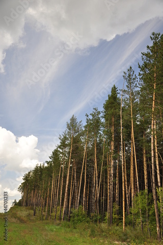 The outskirts of the forest. Landscape.
