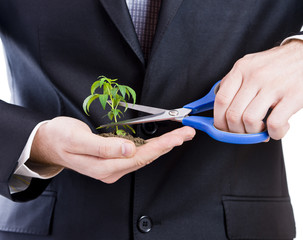 Business  man cutting a plant