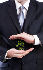 Male hand  in suit holding plant