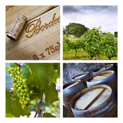 Vigne, vignoble, raisin, vendange, vin, Bordeaux, culture