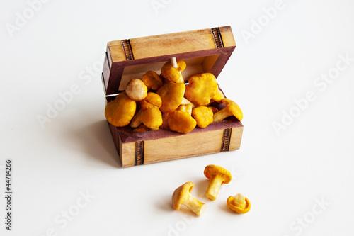 Лисички в деревянном ящике
