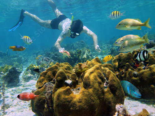 Snorkeler looking a starfish in a coral reef - 44715667