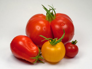 Tomaten - Solanum lycopersicum