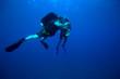 Two diver gathering shells, Cuba