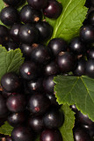 Blackcurrants with leaves closeup