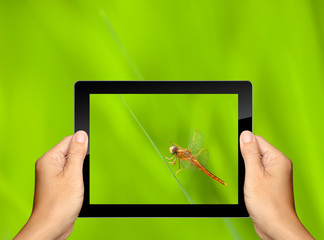 capturing dragonfly with tablet computer