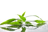Spa Background with Bamboo and Water-