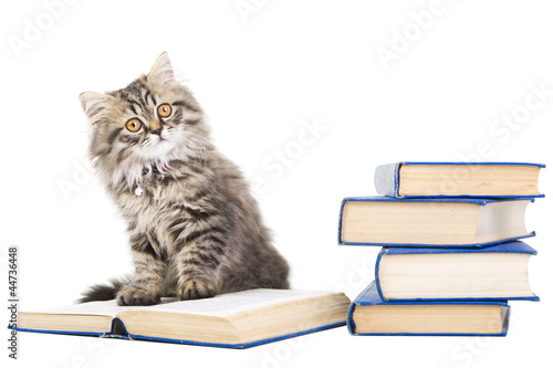 persian kitten reading books on isolated white
