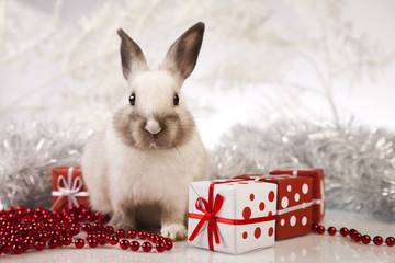 Bunny with Christmas