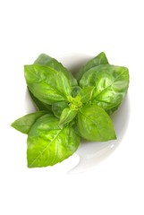 Basil over white