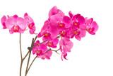 Fototapete Orchidea - Hintergrund - Blume