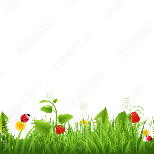 Grass Border With Ladybug And Leaf