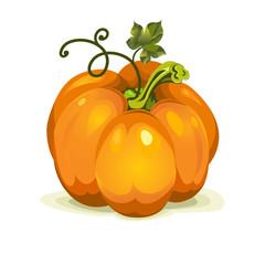 vector pumpkin vegetable fruit