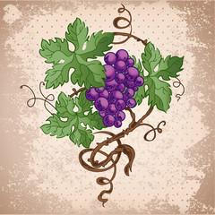 Illustration of grapes on grunge background