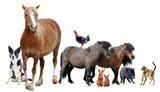Fototapete Hund - Katze - Nutztiere