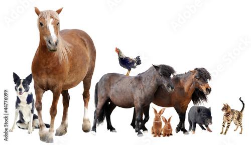 groupe d'animaux de ferme