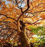 Fototapety Farben des Herbstes