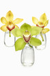 Colorful orchids in glass vases