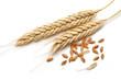 Wheat - 44782854