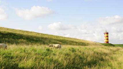 Schafe vorm Pilsumer Leuchtturm