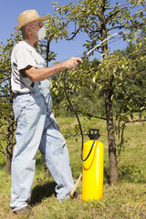 Gardener using a sprayer for applying an insecticide/fertilizer