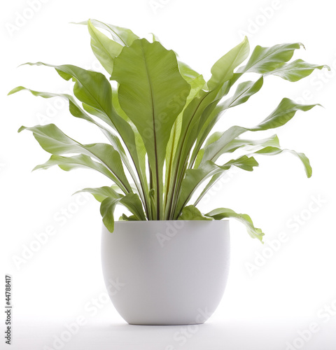 A potted plant isolated on white