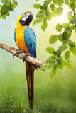 Fototapety Macaw parrot