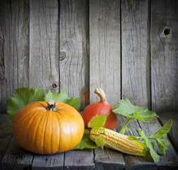 Autumn pumpkins and corn vintage still life