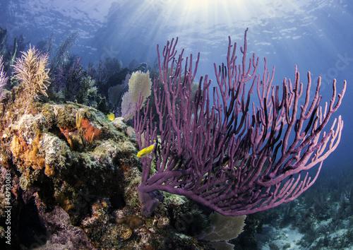 Fotobehang Koraalriffen Coral Reefs of North America