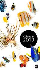 2013 calendar, sea marine life concept, cover page