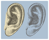 Human ear in engraved style