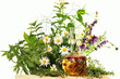 Fototapeten,homöopathie,heilpflanzen,kraut,heilkräuter