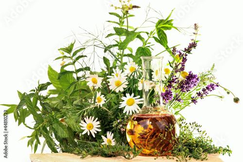 Kräuter und Heilpflanzen, Homöopathie - 44810223