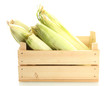 fresh corn in wooden box, isolated on white