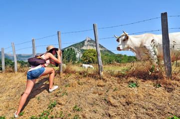 La fotografa e la mucca, Rosans - Hautes Alpes, Francia
