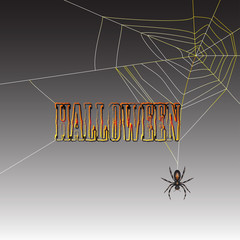 Halloween spider on dark background
