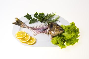 Fisch Dorade Gräte